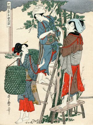 UtamaroKitagawa Joshoku Kaiko Tewaza Kusa Bild02