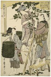 Utamaro Kitagawa Joshoku Kaiko Tewaza Kusa Bild02