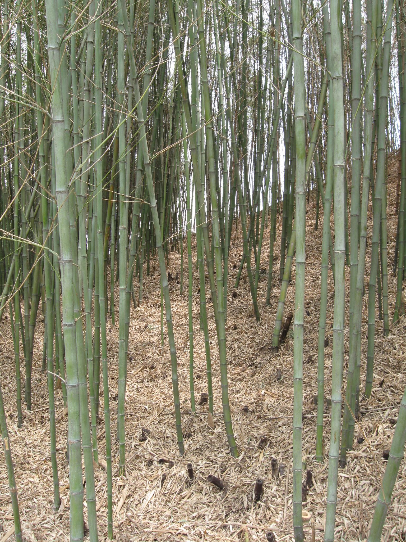 Bambus, Das Ganz Besondere Gras. Roman U0026 Daniela Jost Möbel Im  Traditionellen Koreanischen Und Japanischen Stil. Ikebana Unterricht Und  Zubehör.